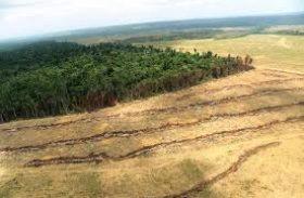 Programa de recuperação de áreas degradadas na Amazônia ganha nova versão