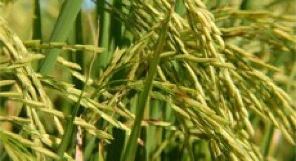 Valor da Produção Agropecuária de 2017 é de R$ 533,5 bilhões