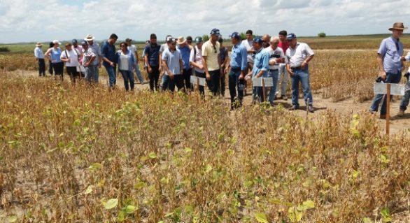Cultura da soja é tema de Dia de Campo em fazenda de Porto Calvo