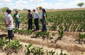 Dia de Campo: Pequenos agricultores aprendem novas técnicas de produção