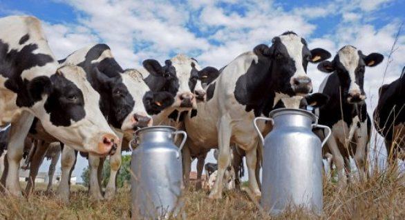 CPLA promove Dia de Campo para apresentar modelo de melhoramento genético no rebanho leiteiro