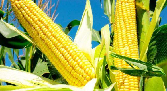 Brasil triplica exportação de milho em novembro
