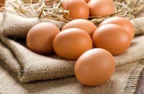 Brasil vai fornecer ovos para a África do Sul