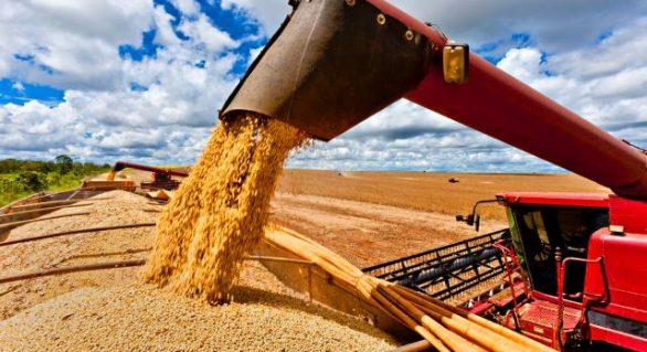 IBGE estima queda de 8,9% na safra de grãos em 2018