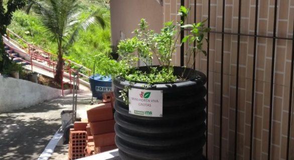 IMA leva mini-hortas para comunidade da Grota da Macaxeira