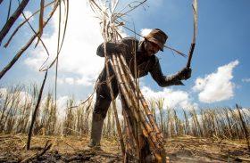 Trabalhadores canavieiros defendem reajuste de 3,1%