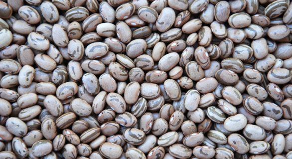 Sementes da cultivar de feijão carioca BRS FC402 já estão disponíveis ao produtor
