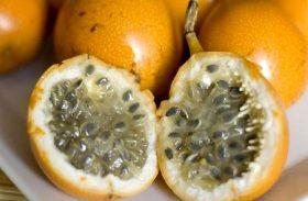 Embrapa lança a primeira cultivar de maracujá-doce
