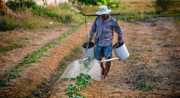 Senado aprova projeto que parcela dívidas de produtores rurais