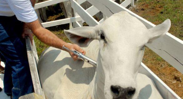 Faeal alerta produtores rurais para prazo da declaração da vacinação contra a febre aftosa