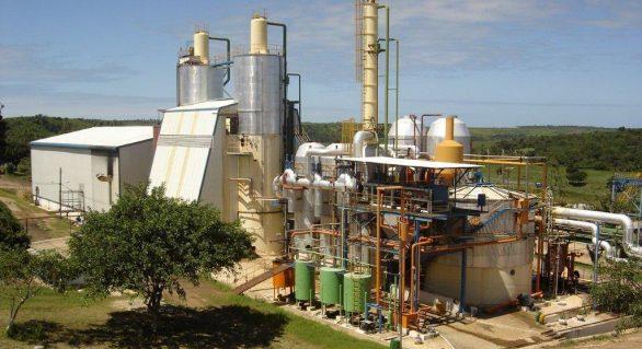 Usina Pindorama já esmagou 560 mil toneladas de cana