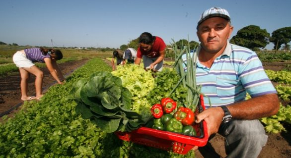 PAA Alagoas promete alavancar produção agrícola familiar