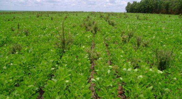 Bayer e Embrapa pesquisam plantas daninhas resistentes a herbicidas