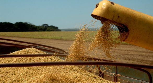 Brasil deve produzir 110,1 milhões de toneladas de soja