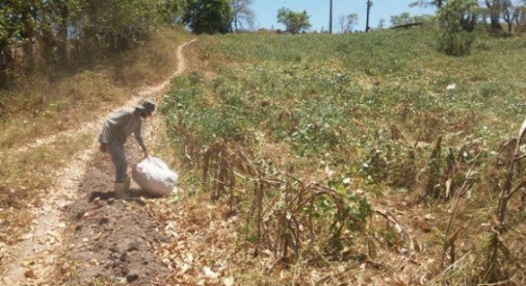 Governo de AL garante pagamento de Seguro-Safra a mais de 20 mil agricultores