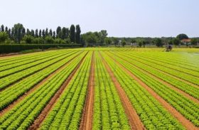 IICA: países em desenvolvimento podem trocar experiências na área agrícola