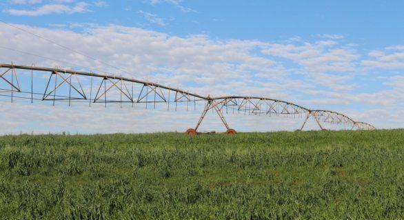 Reuso de efluentes melhora eficiência de utilização da água na pecuária
