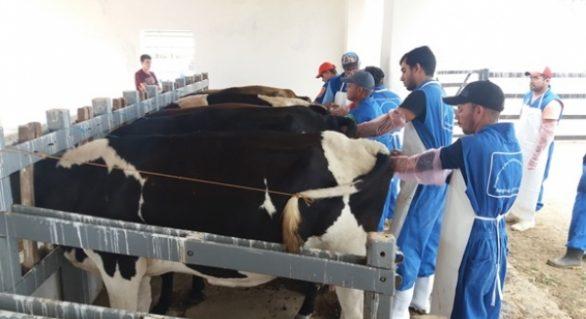 Curso capacita produtores em inseminação artificial de bovinos