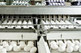 Ovos: Preços reagem nesta segunda quinzena