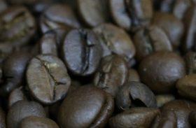 Produtividade média da cafeicultura brasileira em 2018 deverá ser a maior já registrada com 29,47 sacas por hectare
