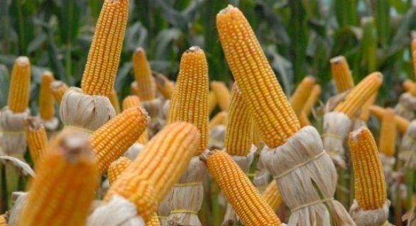 Ano começa com recordes em exportação no agronegócio