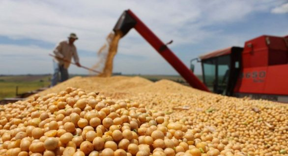 Venda de soja do Brasil patina com produtor à espera de preço mais alto, diz Safras
