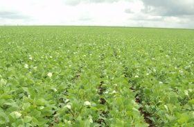 Compactação do solo prejudica mais de 50% das lavouras de soja no Brasil