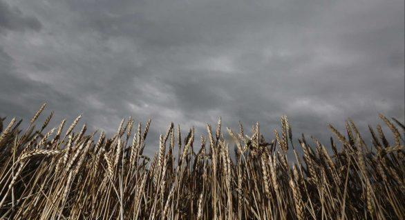 Cientistas criam app com previsão imediata de chuvas a agricultores