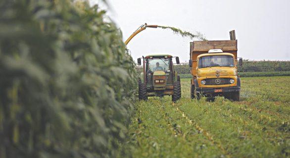 Câmara aprova medida que prorroga adesão ao Refis Rural