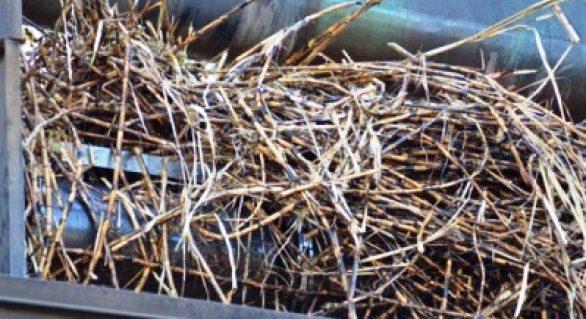 Pindorama encerra safra 17/18 com crescimento de 3,61%