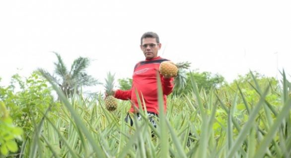 Parceria entre Emater e Prefeitura de Cajueiro incentiva cultivo de abacaxi