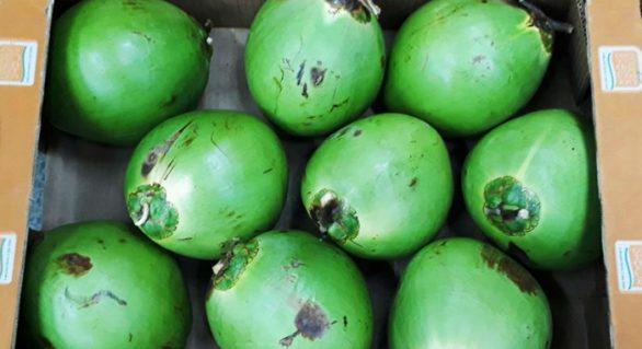 Coco brasileiro ganha mercado europeu graças a película biodegradável