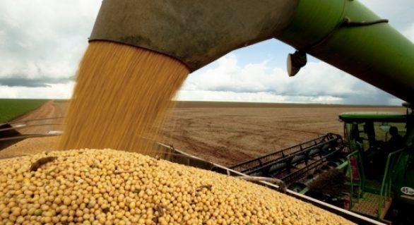 Cultura da soja segue com boas perspectivas de produção