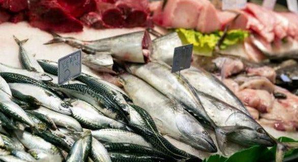 Governo Federal fiscaliza pescados em AL e mais 12 estados