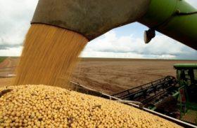 Semente de soja é opção para produzir substância usada no combate à aids