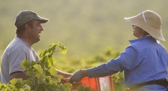 Agro cria mais de 37 mil vagas de trabalho e se consolida como motor da economia