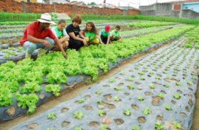 Alagoas tem reconhecimento da compra e venda no mercado brasileiro