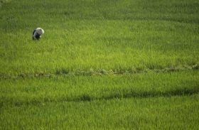 Com queda da Selic, produtor rural abre mão de crédito subsidiado