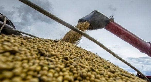 Soja do Brasil acelera mudança de patamar produtivo