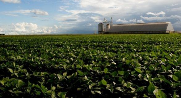 Brasil já vendeu 51,9% de sua soja