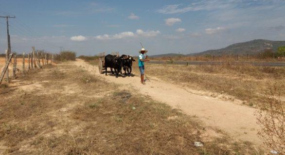 Agricultores familiares de AL recebem Garantia-Safra a partir desta terça (17)