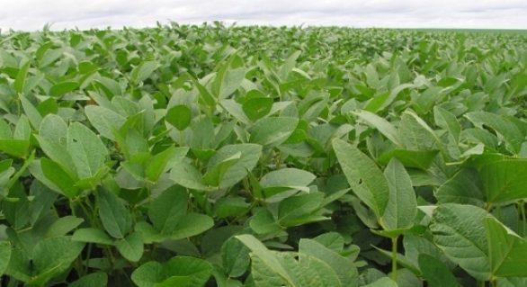 Primeiro trimestre tem alta nas exportações do agronegócio