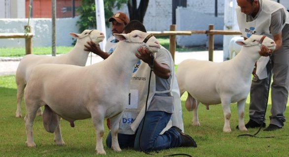 Presidente da Faeal destaca sucesso da Expoalagoas Genética