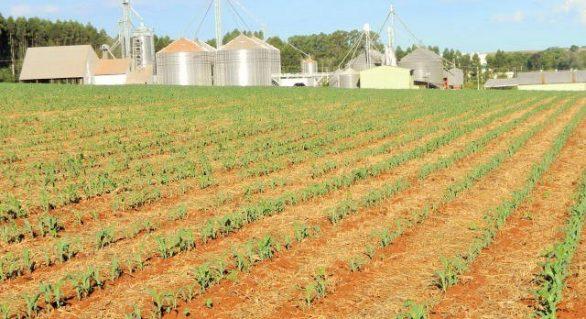 Contratação de crédito rural cresce 12,4% e alcança R$ 92,1 bilhões