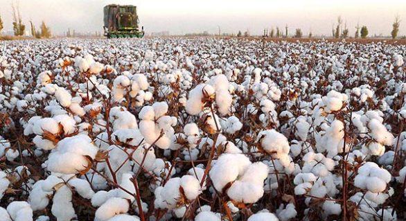 Valor da Produção Agropecuária é de R$ 542 bilhões em 2018