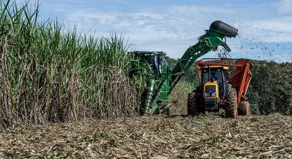 Presidente do Sindaçúcar-AL aposta na retomada do setor canavieiro