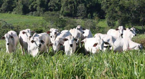 Tradição na pecuária atravessa gerações em Alagoas