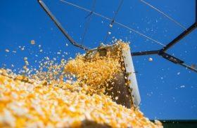 Safra de grãos volta a nível histórico com produção de 232 milhões de toneladas