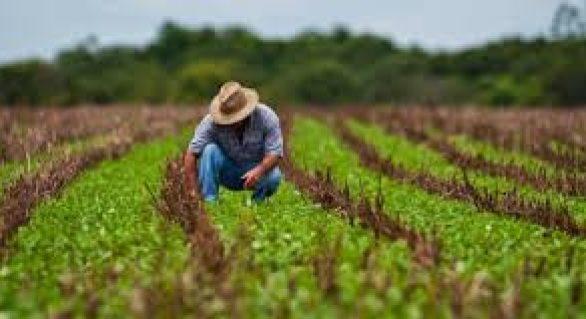 Crédito ao agronegócio está em crescimento, diz Banco do Brasil