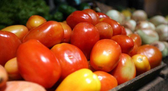 Resultados trimestrais da agropecuária apontam crescimento do setor